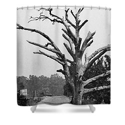 Chiseled Tree In Highway Shower Curtain by Sumit Mehndiratta