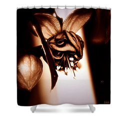 Shower Curtain featuring the photograph Chocolate Silk Fuchsia II by Jeanette C Landstrom