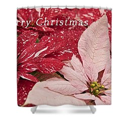 Christmas Poinsettias Shower Curtain by Michael Peychich