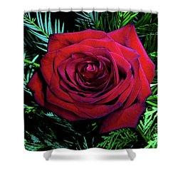 Christmas Rose Shower Curtain by Mariola Bitner