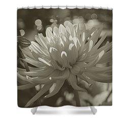 Chrysanthemum In Bloom Shower Curtain by Xueling Zou
