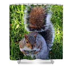 City Squirrel Shower Curtain