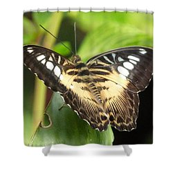 Shower Curtain featuring the photograph Clipper Butterfly by Lynn Bolt