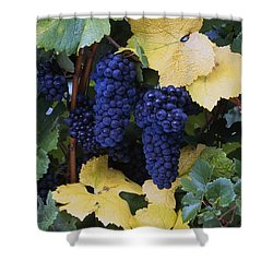 Close-up Of Ripe, Wine Grapes And Leaves Shower Curtain by Natural Selection Craig Tuttle