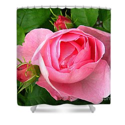 Rose And Rose Buds Shower Curtain