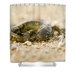 Close Up Tiger Salamander Shower Curtain by Mark Duffy