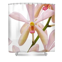 Closeup Pink Orchid Shower Curtain by Atiketta Sangasaeng