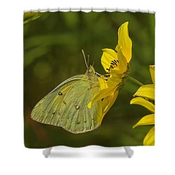 Clouded Sulphur Butterfly Din099 Shower Curtain