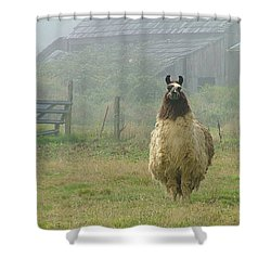 Shower Curtain featuring the photograph Coast Llama by Wendy McKennon
