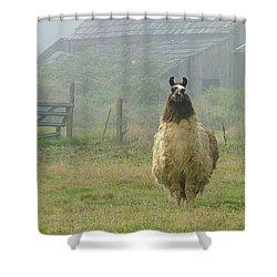 Coast Llama Shower Curtain