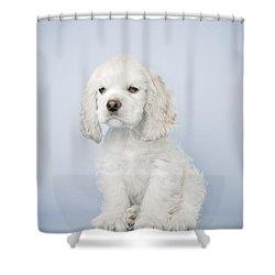 Cocker Spaniel Shower Curtain by David DuChemin
