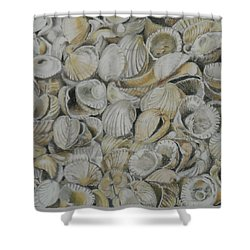 Cockle Shells Shower Curtain