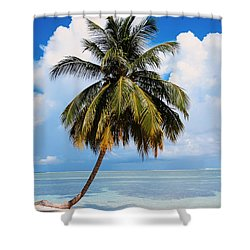 Coconut Palm Tree On The Beach.maldives Shower Curtain by Jenny Rainbow