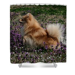 Cody Shower Curtain by Karen Harrison