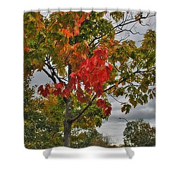 Shower Curtain featuring the photograph Cold Autumn Breeze  by Michael Frank Jr
