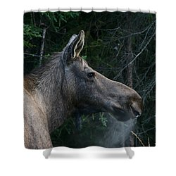 Shower Curtain featuring the photograph Cold Morning by Doug Lloyd