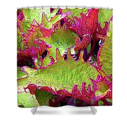 Coleus With Raindrops Shower Curtain by Judi Bagwell