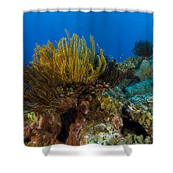 Colony Of Crinoids, Papua New Guinea Shower Curtain by Steve Jones