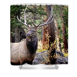 Shower Curtain featuring the photograph Colorado Elk by Nava Thompson