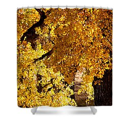 Colorado Gold Shower Curtain by Colleen Coccia