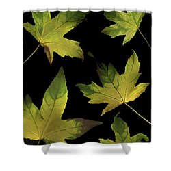 Colorful Autumn Leaves Shower Curtain by Deddeda