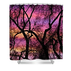 Colorful Silhouetted Trees 21 Shower Curtain by James BO  Insogna