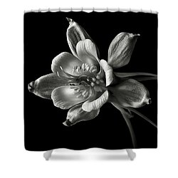 Shower Curtain featuring the photograph Columbine In Black And White by Endre Balogh