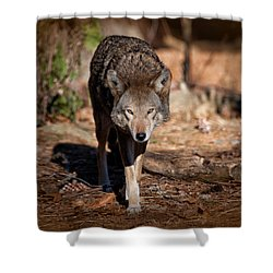 Coming Right At You Shower Curtain by Karol Livote