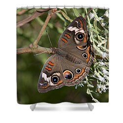 Common Buckeye Butterfly Din182 Shower Curtain