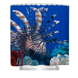 Common Lionfish Shower Curtain by Franco Banfi and Photo Researchers