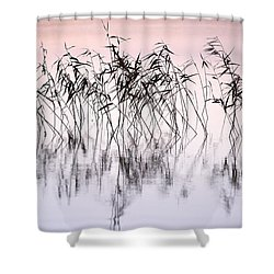 Common Reeds Shower Curtain by Jouko Lehto