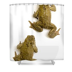 Common Toad Shower Curtain by Mark Bowler and Photo Researchers