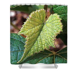 Concord Grape Plant Shower Curtain by Science Source