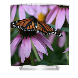 Shower Curtain featuring the photograph Cone Flowers And Monarch Butterfly by Kay Novy