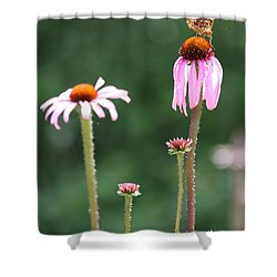 Coneflowers And Butterfly Shower Curtain