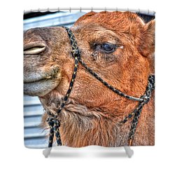 Confidence  Shower Curtain by Michael Frank Jr