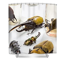 Confiscated Beetles Shower Curtain by Science Source