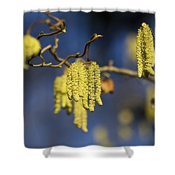 Shower Curtain featuring the photograph Contorted Hazel Catkins by Clare Bambers