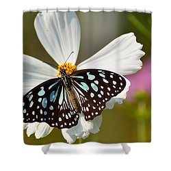 A Study In Contrast Shower Curtain by Fotosas Photography
