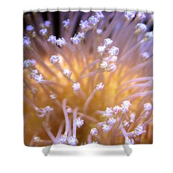 Coral 3 Shower Curtain