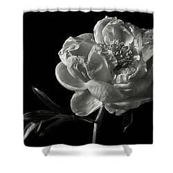 Shower Curtain featuring the photograph Coral Peony In Black And White by Endre Balogh