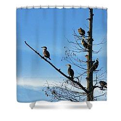 Shower Curtain featuring the photograph Cormorants by Lizi Beard-Ward