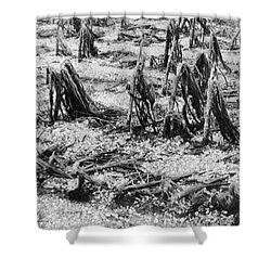 Cornfield After Hailstorm Shower Curtain by Science Source
