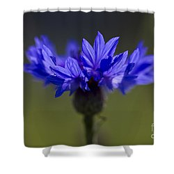 Shower Curtain featuring the photograph Cornflower Blue by Clare Bambers