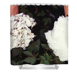 Cotton Comparison Shower Curtain by Photo Researchers