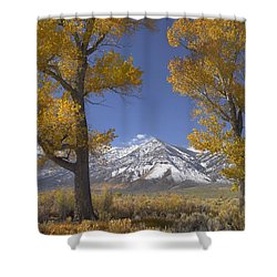Cottonwood Trees Fall Foliage Carson Shower Curtain by Tim Fitzharris