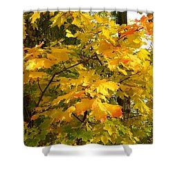Country Color 10 Shower Curtain by Will Borden