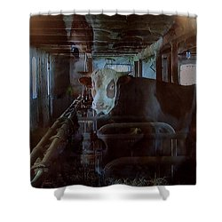 Cow Shelter Indoor Shower Curtain by Colette V Hera  Guggenheim