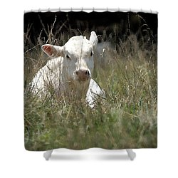 Cow's Meadow Shower Curtain by Karol Livote