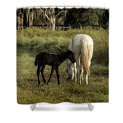 Cracker Foal And Mare Shower Curtain by Lynn Palmer